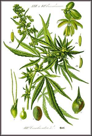 What Is Medical Marijuana | Medical Marijuana Uses | Chronic ...