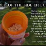 Cannabis frees from side effects of morphine