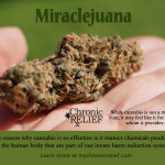 Miraclejuana