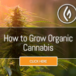 How to Grow Organic Cannabis