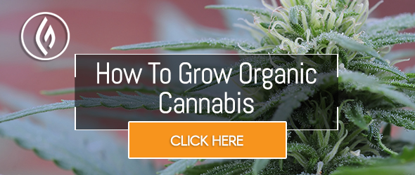 Green Flower's Growers Quest