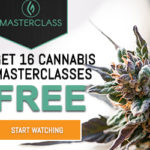 Exclusive, Custom-curated Cannabis MasterClass